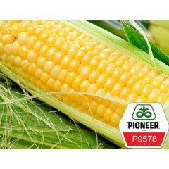 Насіння кукурудзи Pioneer Р9578