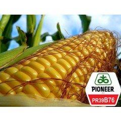 Семена кукурузы Pioneer PR39B76