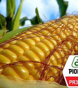 Насіння кукурудзи Pioneer PR39B76