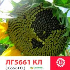 Насіння соняшнику ЛГ 5661