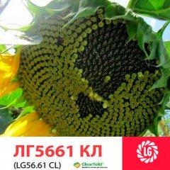 Семена подсолнечника ЛГ 5661