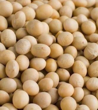 Семена сои Прогрейн САСКА (SASKA)