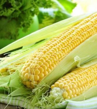 Семена кукурузы Трон МС