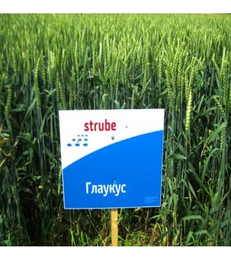 Озимая пшеница ГЛАУКУС 1 репродукция