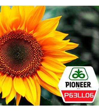 Семена подсолнечника Пионер P63LL06