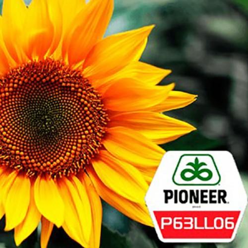 семена подсолнечника пионер 109 отзывы