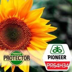 Подсолнух Пионер PR64H34