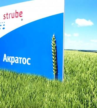 Озимая пшеница АКРАТОС 1 репродукция