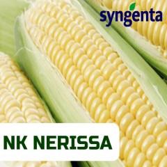 Насіння кукурудзи НЕРИСА (Фао 200) Сингента