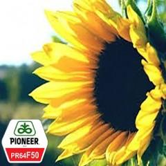 Насіння Соняшнику Піонер PR64F50