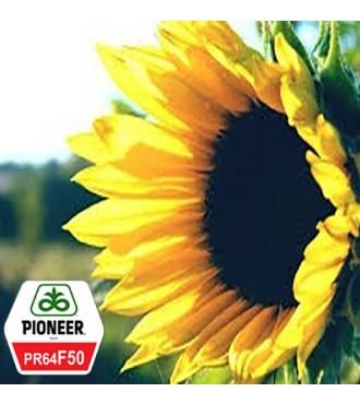 Семена Подсолнечника Пионер PR64F50