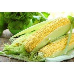 Семена кукурузы ДМС Бенефис