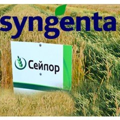 Озима пшениця СЕЙЛОР 1 репродукція