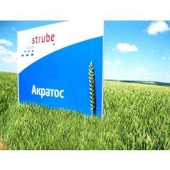 Озима пшениця АКРАТОС 1 репродукція