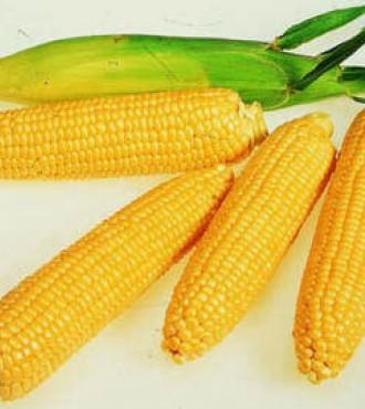 Насіння Кукурудзи: НС-400 (ФАО 380-400)