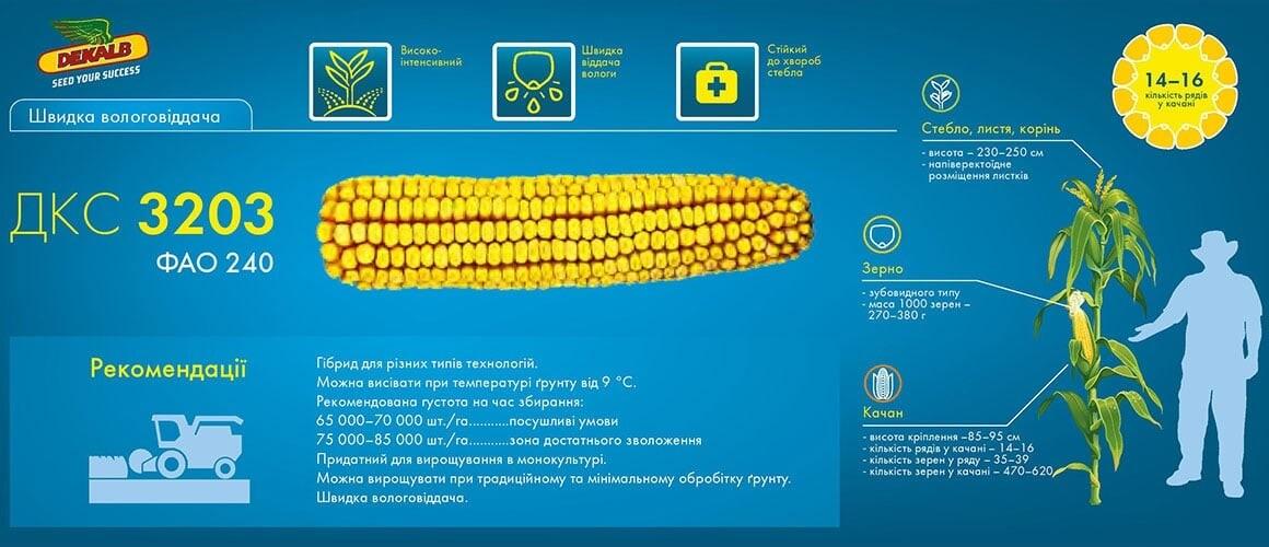 Семена кукурузы ДКС 3203 цена
