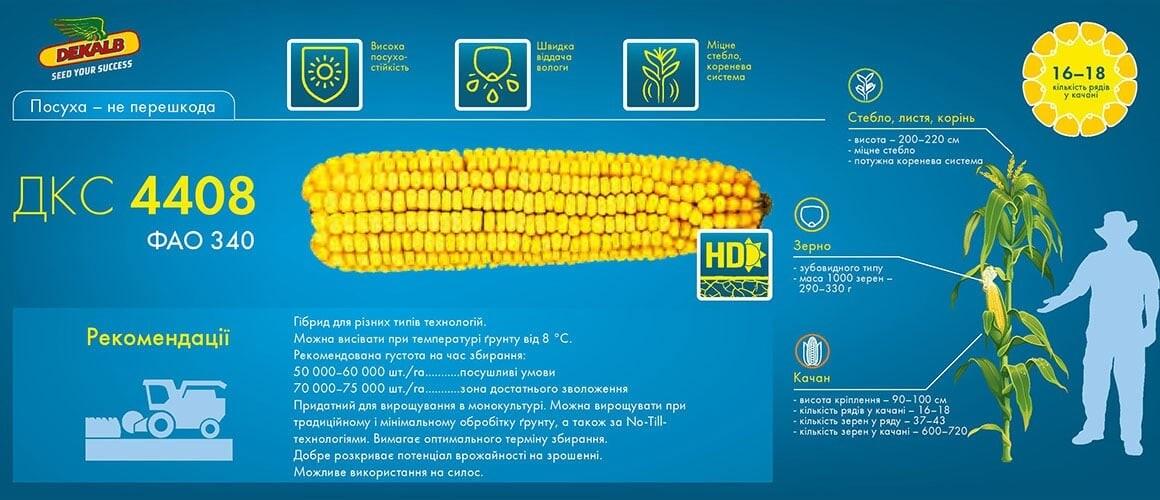 Семена кукурузы ДКС 4408 цена