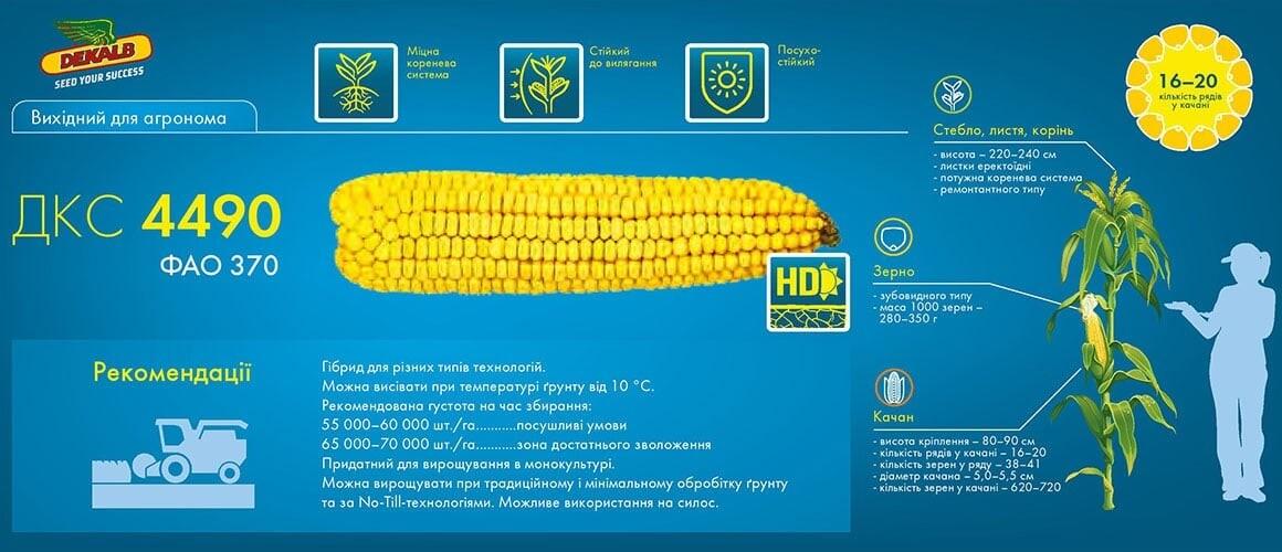 Семена кукурузы ДКС 4490 цена