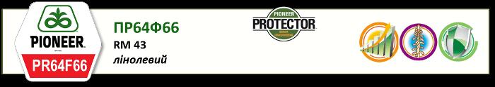 Семена подсолнечника Пионер PR64F66 цена