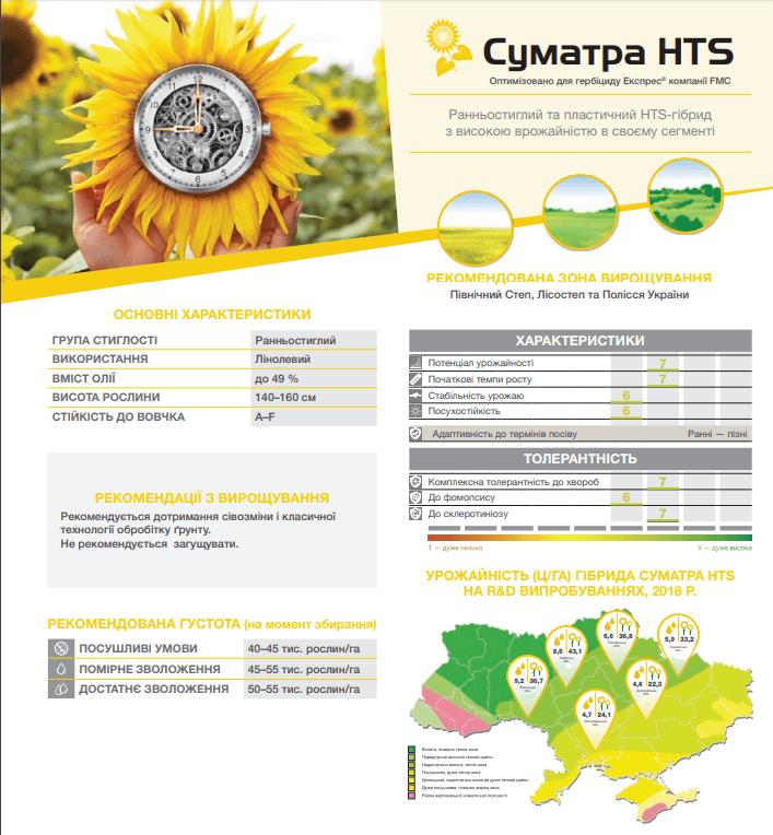 Купити Насіння соняшнику Суматра HTS Syngenta