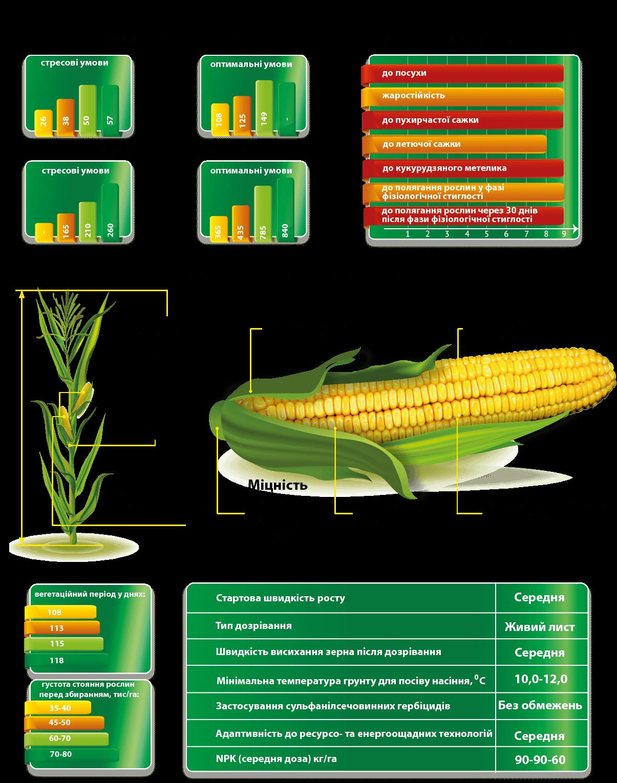 Семена кукурузы ДМС 3411