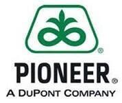 купить Семена кукурузы Пионер PR38A79