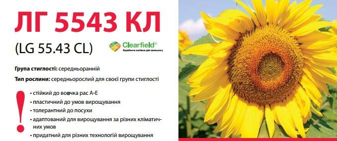 купить Семена подсолнечника ЛГ 5543