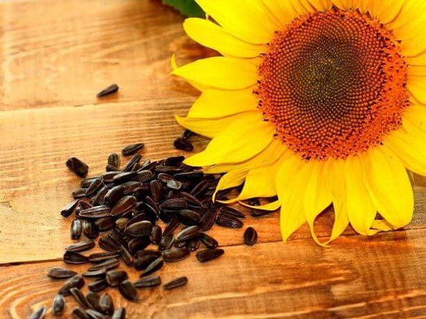 Семена Подсолнечника Limagrain