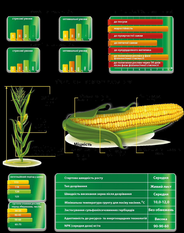 Насіння кукурудзи ДМС Адаптер МАЇС купити