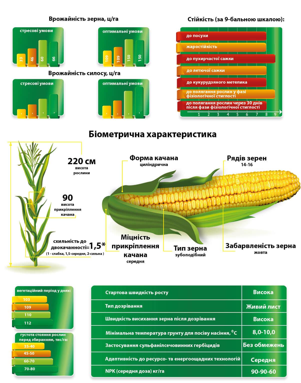 Насіння кукурудзи ДМС Гроно МАЇС.Купити в Україні