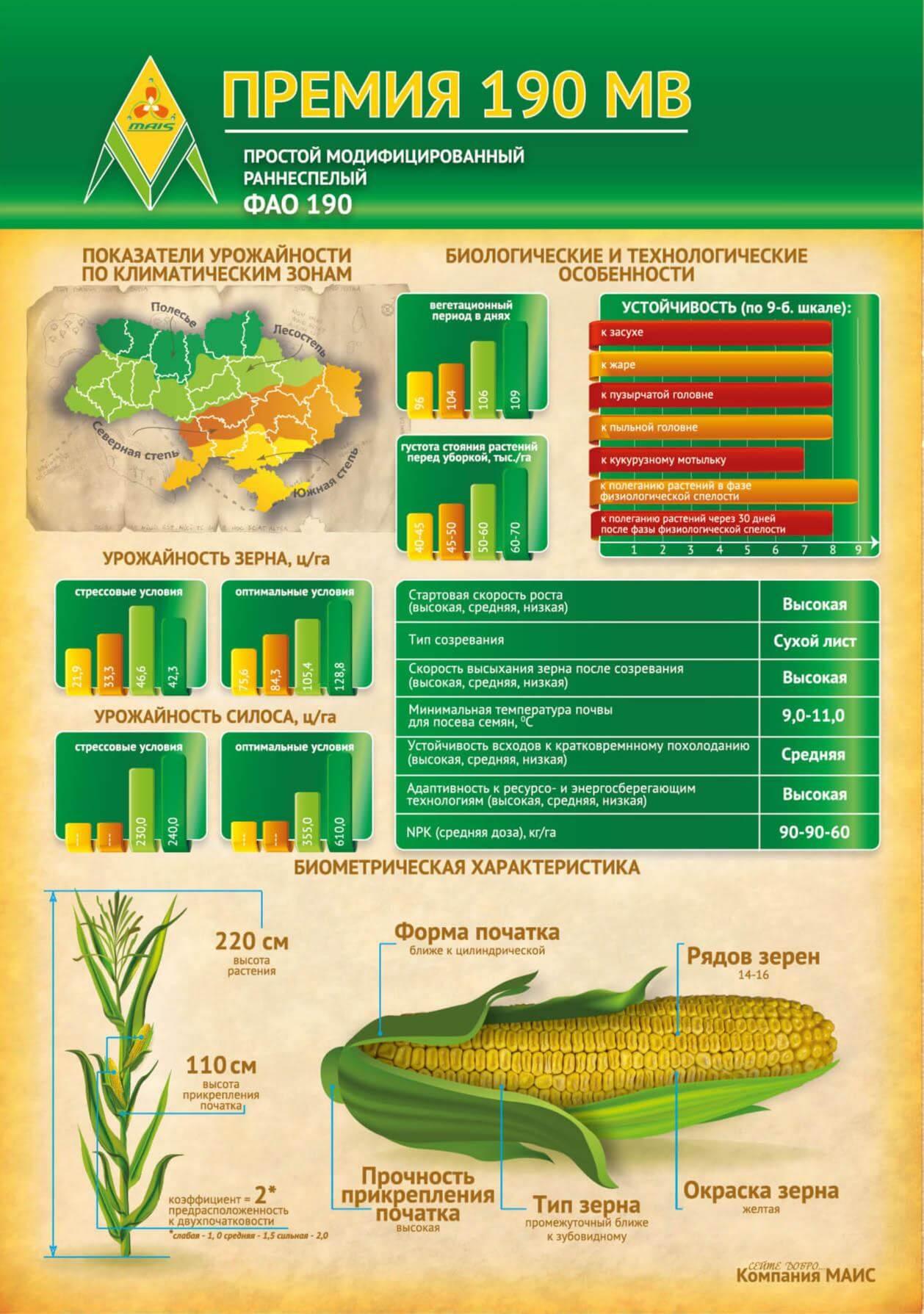 Семена кукурузы Премия 190 МВ МАИС.Купить.Цена