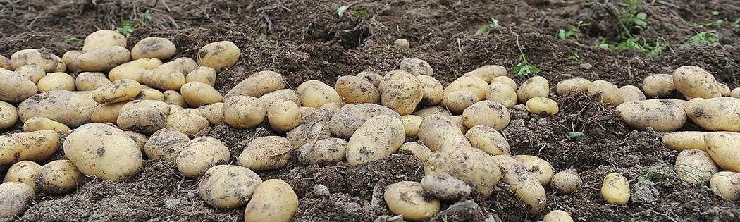 Протравители для картофеля купить в Украине