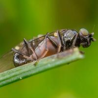 Инсектицидные протравители норма расхода