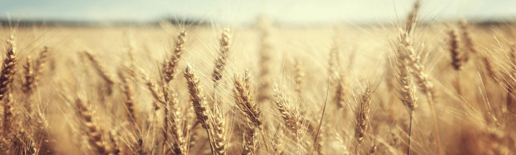 Протравитель для пшеницы
