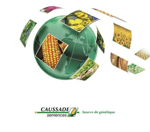 Семена подсолнечника Caussade semences