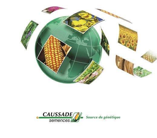 Насіння соняшнику Caussade semences
