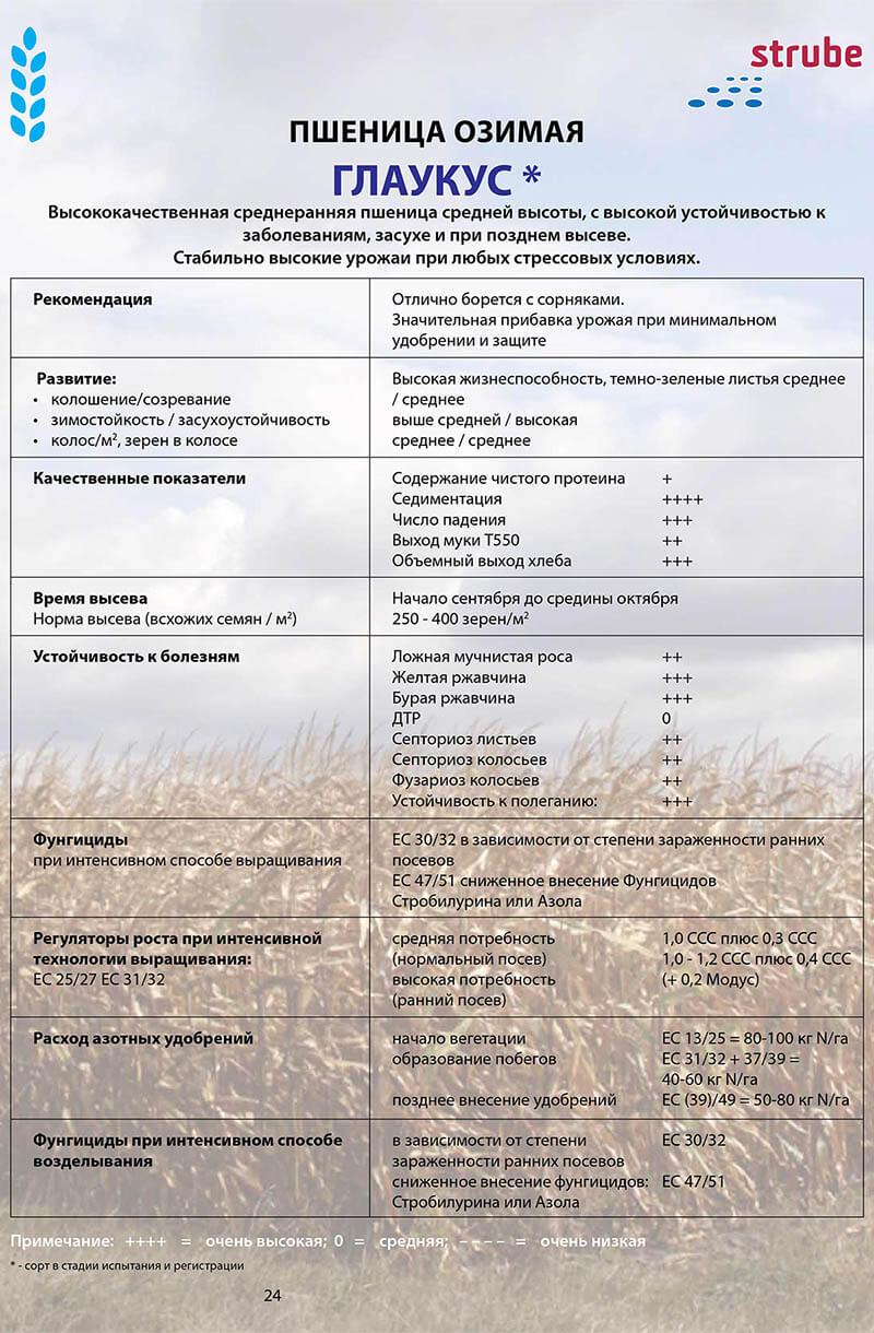 Озимая пшеница ГЛАУКУС купить