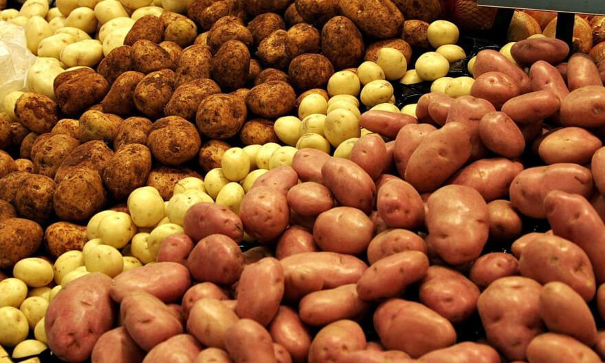голландские семена картофеля