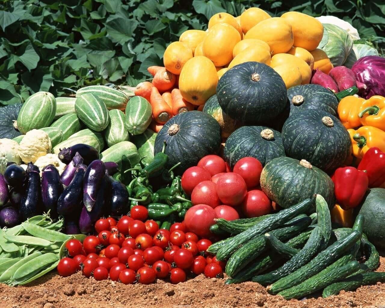 купить семена овощей почтой
