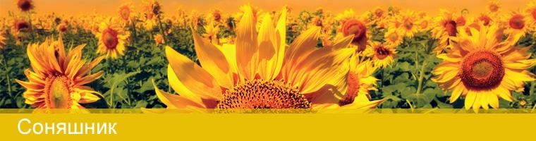 Купити Насіння соняшника SYNGENTA