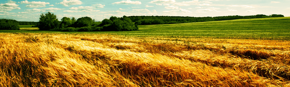 купити гербіциди для пшениці