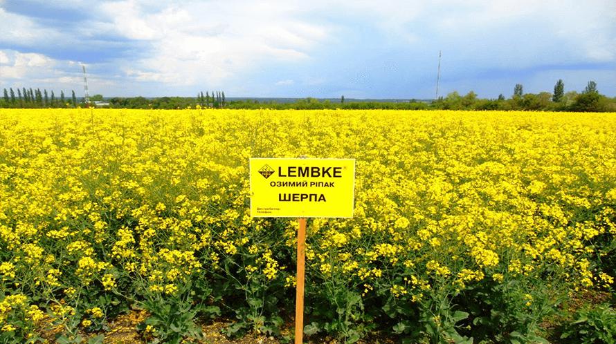 Семена рапса Шерпа отзывы в Украине